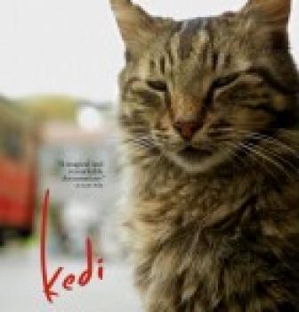 Kedi- sekretne życie kotów  – od28.07