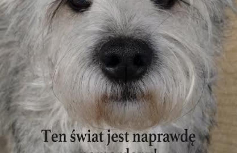Był sobie pies- zbieramy żywność dla schroniska – 18.02, 11:00